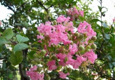 Trees In Hiroshima